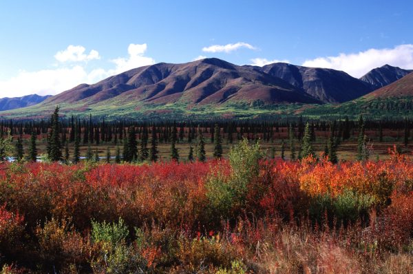 denali-national-park-autumn